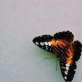 aviary-image-15359328544181246475856.jpeg